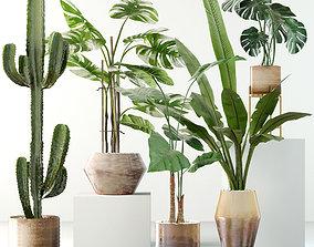 Plants collection 04 tropical 3D