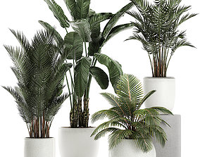 3D model Plants in a white pot for the interior 673