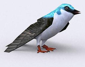 3DRT - Swallow animated