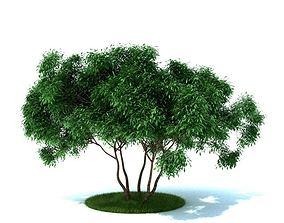 3D Garden Plant Shrub