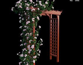 3D Rose plant set 18