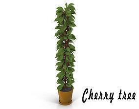 Cherry tree 3D cherry
