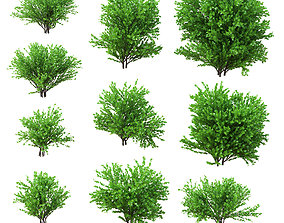 3D model Set deciduous shrubs 10 species v2