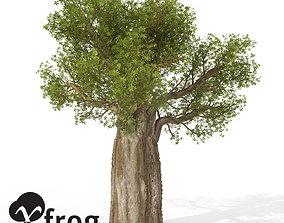 XfrogPlants Baobob 3D model
