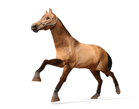 Horse 3D Model animated
