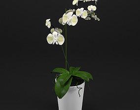 3D florafauna Orchid