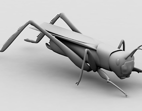 3D insect Grasshopper