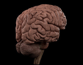 Complete Brain Pack 3D