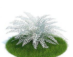 3D model White Dusty Miller Plant
