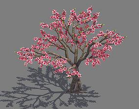 3D model Plant - Peach 13