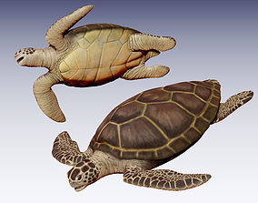 3D model Sea Turtle