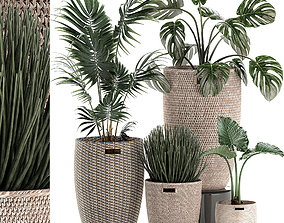 3D Decorative plants in a basket 570