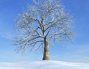 Frozen Tree 3D
