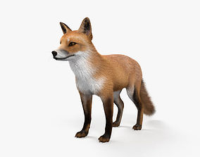 3D European Red Fox HD