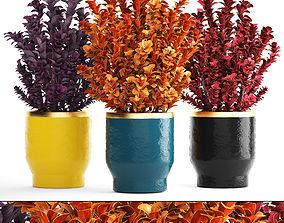 3D model Plant in pot berberis