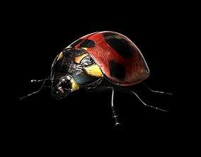 ladybug 3D model rigged