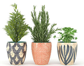 3D Kitchen plants