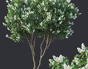 3D model Lilac Syringa vulgaris Nr4 - Two trees H390cm