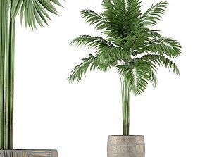 3D Plants collection 220