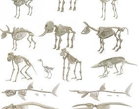3D model Animal Skeleton Collection 18 in 1