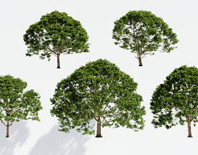 3D other Ash trees