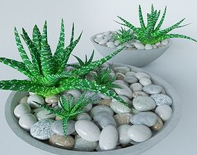 Succulents in bowl with stones 3D