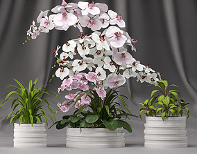 3D Orchid arrangement with plants