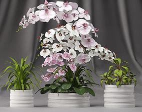3D Orchid arrangement with plants