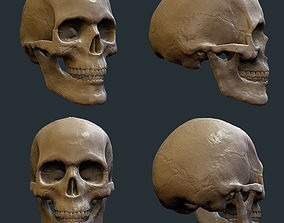 3D model skull