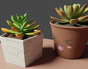 Echeveria - Harmsii Ruby Slipper 3D model