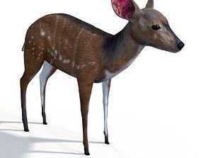 3D Bush buck