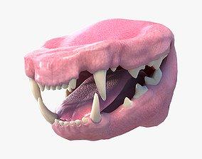 Cat Mouth 3D model