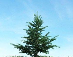Small Pine Tree 3D