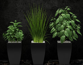 3D model Kitchen plants