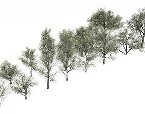 Spring and Summer Trees 3D model low-poly