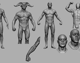 3D model Male Anatomy Collection v2