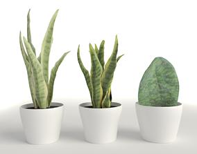 low-poly Plant sansevieria 3d model
