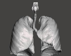 3D printable model Human Respiratory System