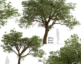 Set of Olive or Olea Europaea Trees - 2 Trees 3D model