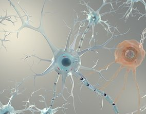 Brain Neurons for Cinema 4d 3D model