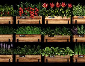 Home plants 3D model