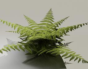 3D model Low Poly Hand Drawn Fern