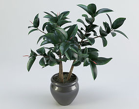 Pipal plant in a pot 3D model