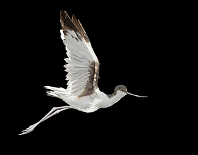 Realistic Avocet Rigged bird Not animated 3D model