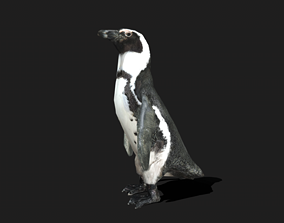 African Penguin - Animated 3D asset realtime
