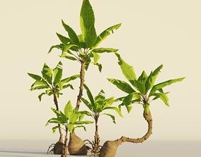 3D asset Cartoon Stylized Hand painted Palm tree set