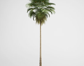 CGAxis Mexican Fan Palm 10 3D model