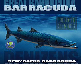 3D model Barracuda