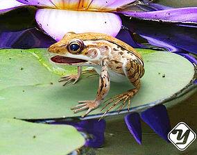 3D asset Frog Rigged Model