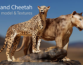 3D asset Lion and Cheetah - Digital Model and Textures